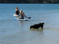 dog two women paddling off